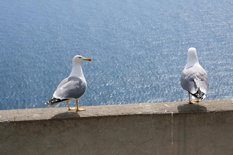 Download Seagull Royalty Free Stock Photography - Image: 28694057