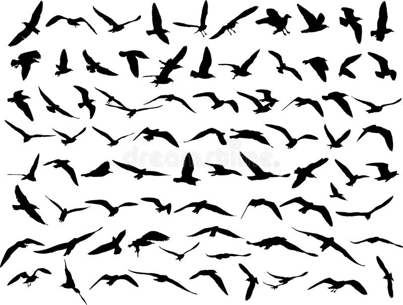 Seagull stock illustrationer