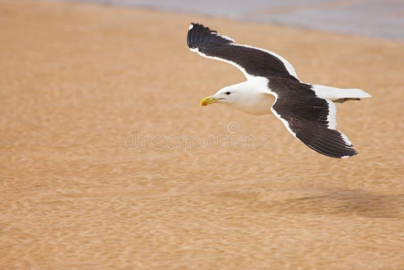 Seagull #6 stock photos