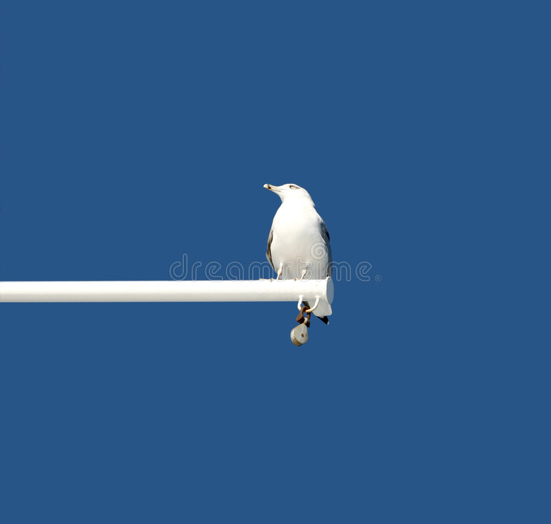 Download Seagull Stock Photo - Image: 7302480