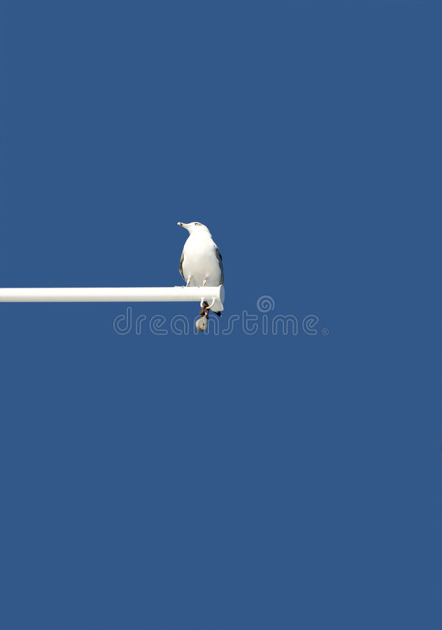Download Seagull stock photo. Image of coast, flap, animal, boat - 7302484
