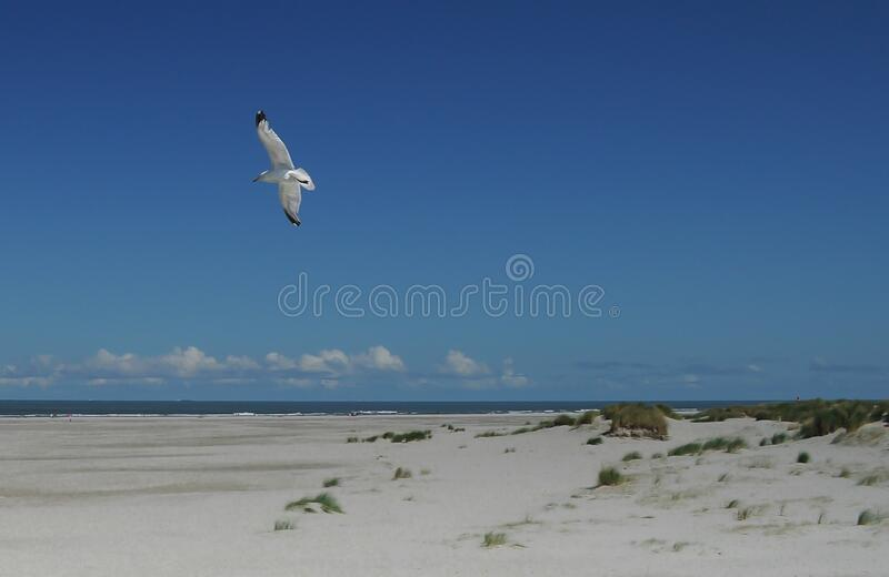Seagull above beach stock image