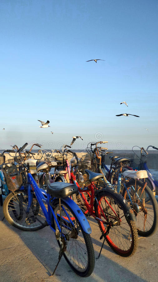 Seagull above Bicycle on jetty at Bang Pu Thailand. Seagull fly over blue sky and bicycles . Almost every household own a bike since it is the most popular and royalty free stock photo