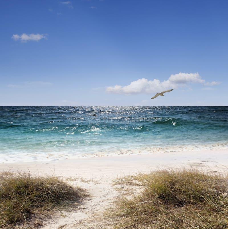 Download Seagull above the sea stock image. Image of coastline - 26944947