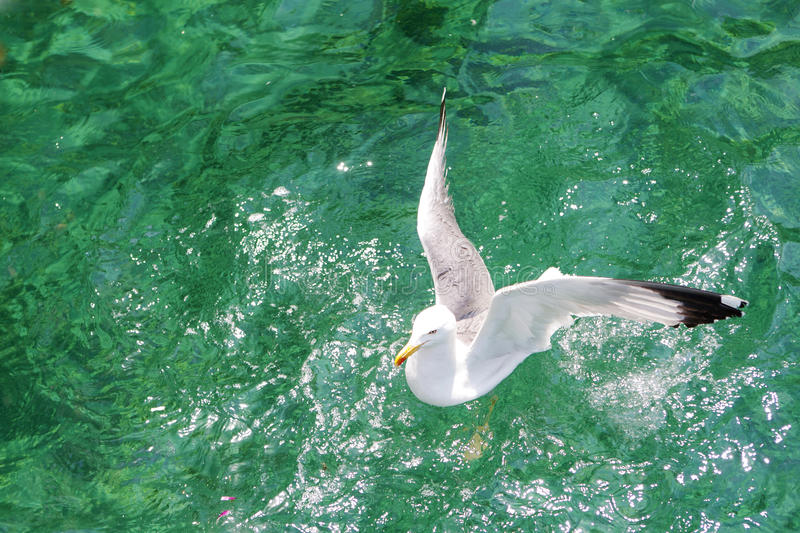 Download Seagull On The Aegean Sea Royalty Free Stock Photo - Image: 20017725