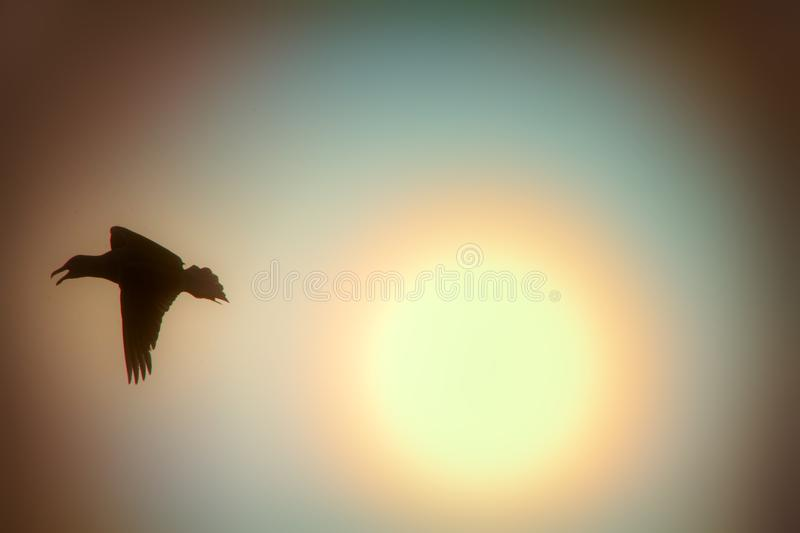 Seagull against sky with sun in haze. Romantic picture, art of flight. Seagull against sky with sun in haze. Bird of dreams concept, luck, chance, high-flier royalty free stock image