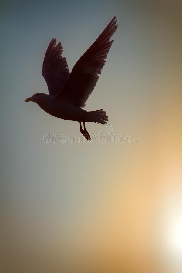 Seagull against sky with sun in haze. Romantic picture, art of flight. Seagull against sky with sun in haze. Bird of dreams concept, luck, chance, high-flier stock photo