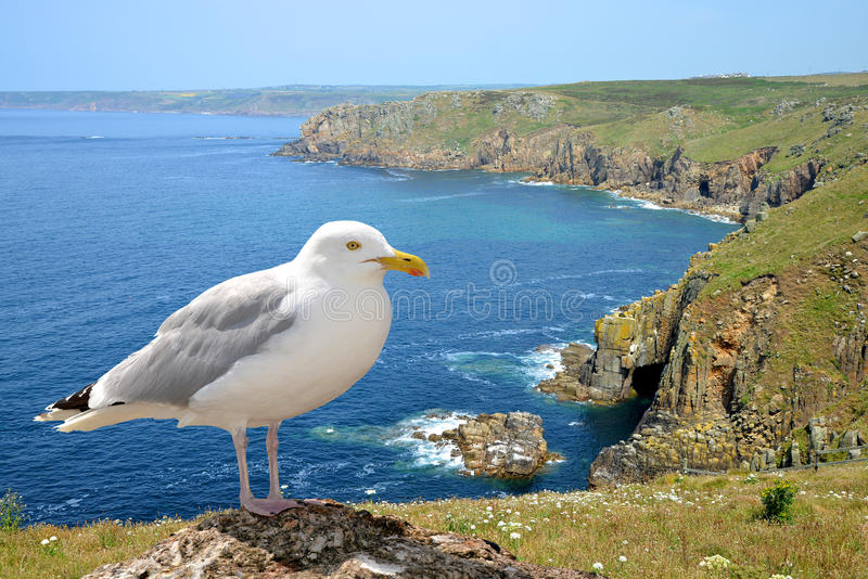 Download Seagull Stock Photo - Image: 39239742