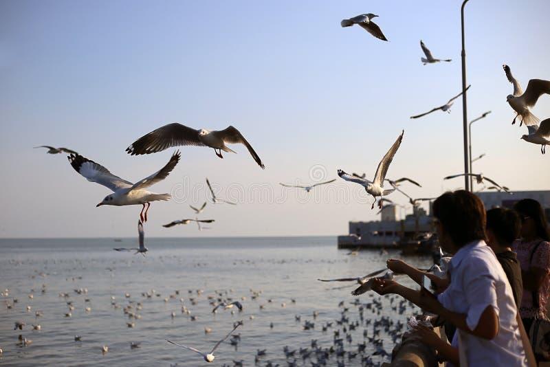 Seagull in Bangpu Samutprakan royalty free stock images