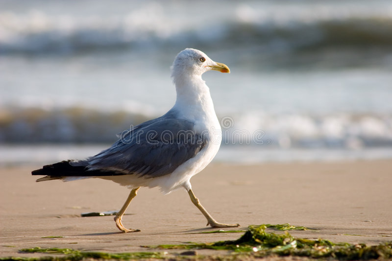 Download Seagull on the beach stock photo. Image of rest, grass - 230732