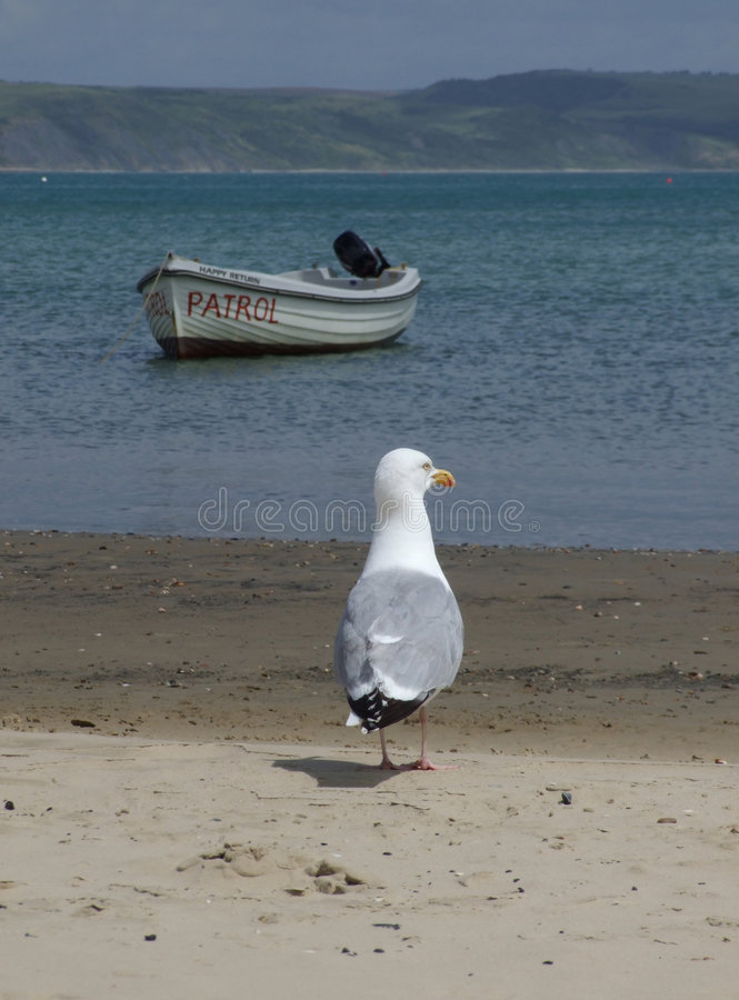 Download Seagull On The Beach Stock Image - Image: 2758781