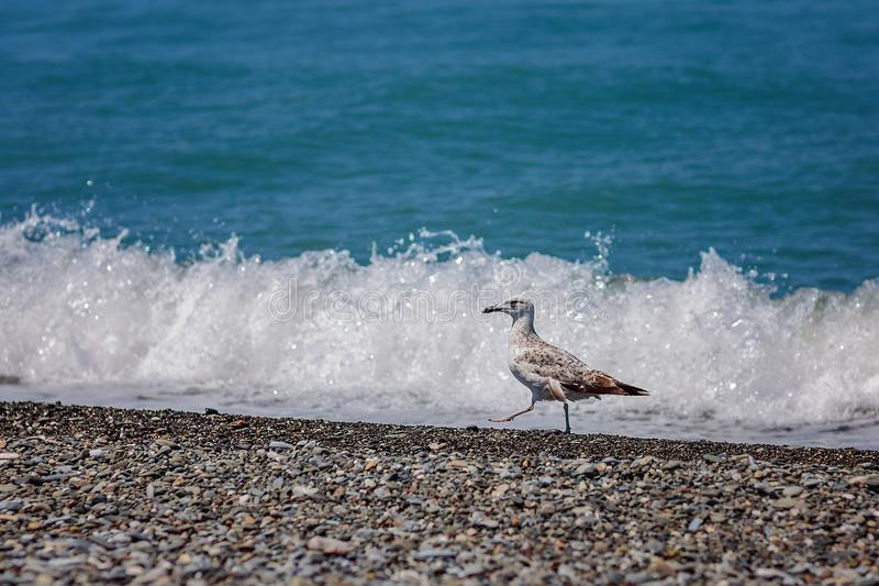 Gull and sea stock image