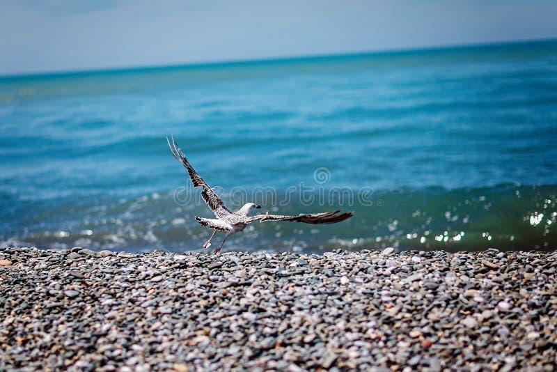 Gull and sea royalty free stock photos