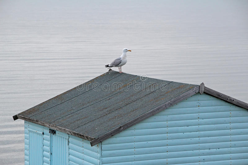 Seagull on beach hut. Photo of a seagull perched atop a beach hut on the kent coast of whitstable taken 30th april 2017 royalty free stock photo