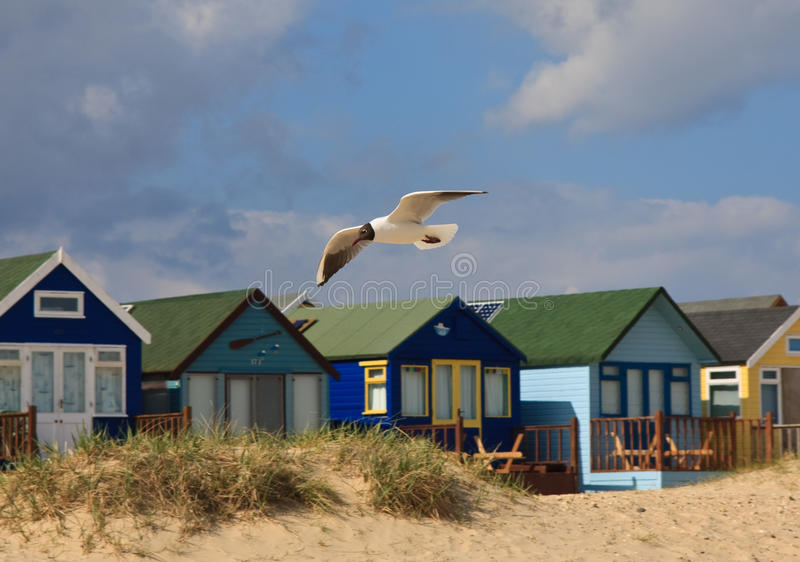 Download Seagull and Beach Huts stock image. Image of huts, grass - 12826715
