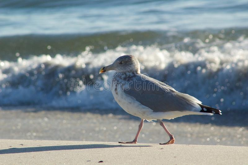 Seagull at the Beach stock photo