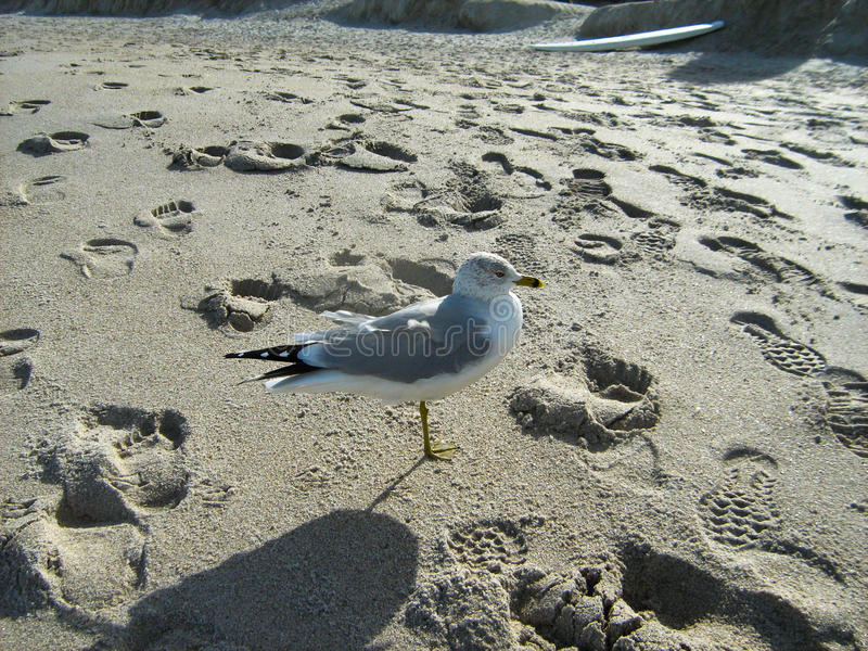 Seagull at Beach stock image