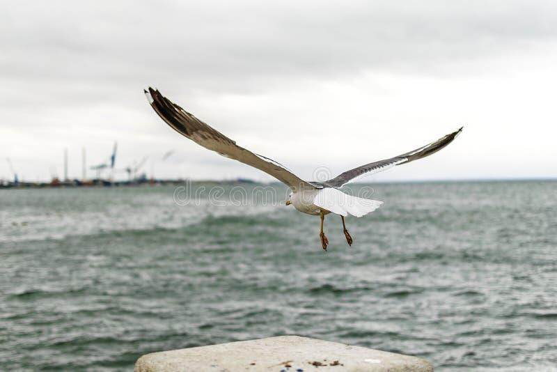 Seagull bierze daleko na chmurnym dniu fotografia stock