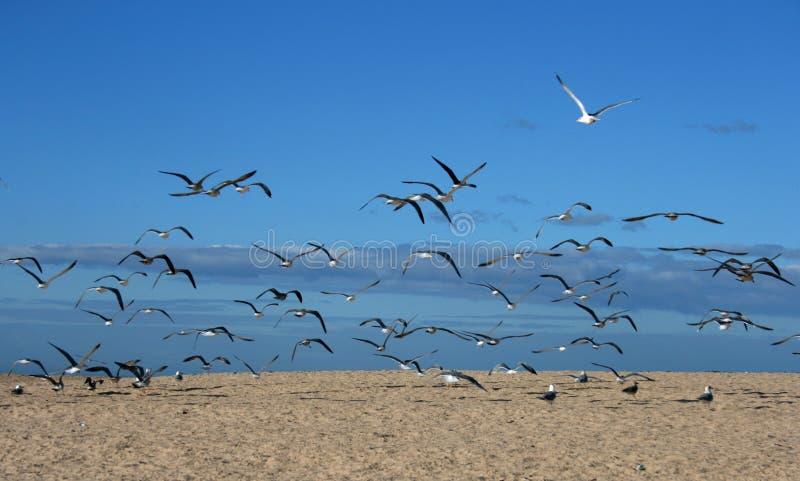 Seagull birds stock photo