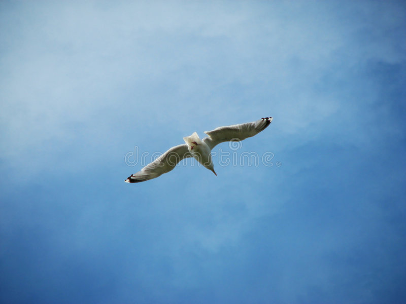 Seagull and the blue sky royalty free stock images