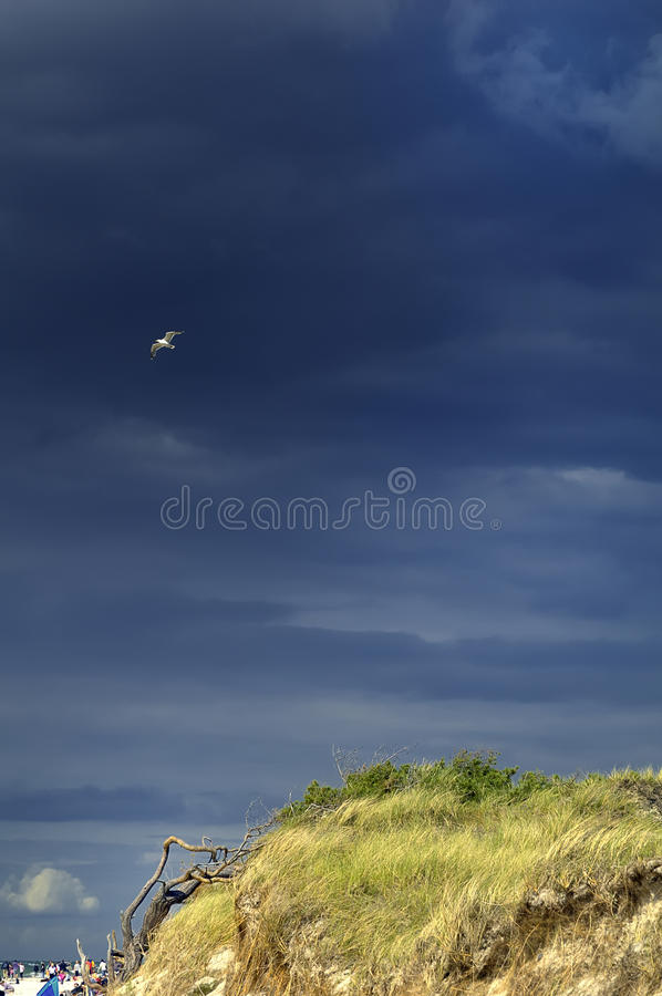 Download Seagull in blue sky stock image. Image of wings, soars - 17607203