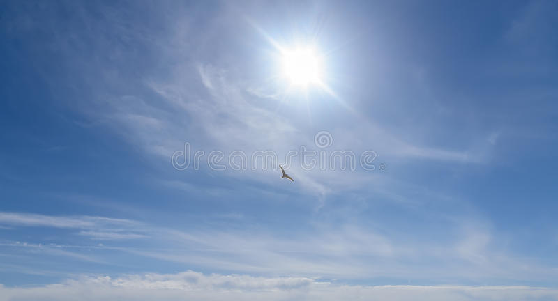 Seagull in blue sky sunlight. Heavenly Expanse. Lonely soaring seagull in blue sky with clouds and sunlight stock photo