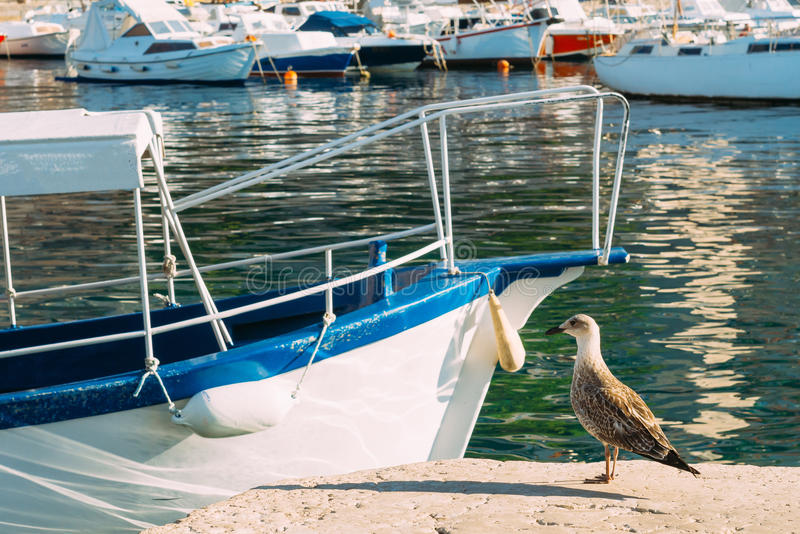 Seagull on boat moorage. Close-up. In Montenegro, the Adriatic S. Ea royalty free stock images