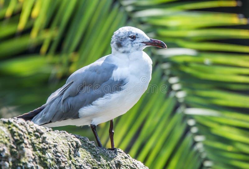 Seagull chłodzić zdjęcie stock