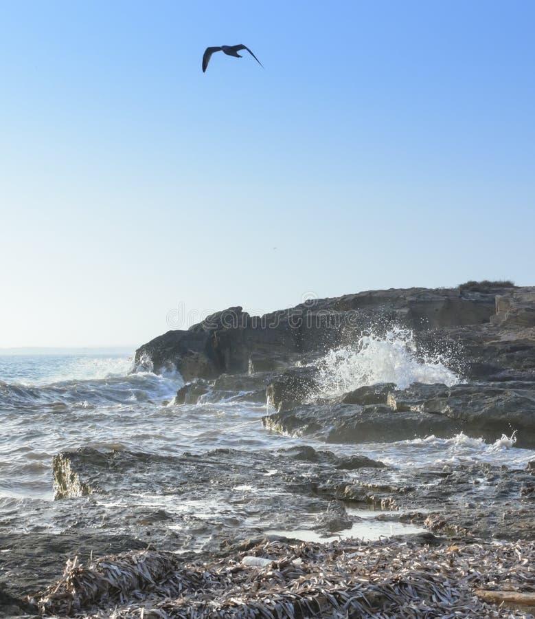 Seagull Choppy morza obrazy royalty free