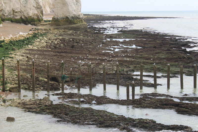 Seagull coast line stock photography