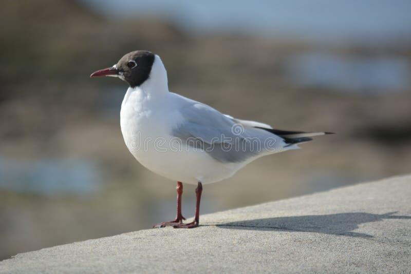 Seagull On Concrete Free Public Domain Cc0 Image