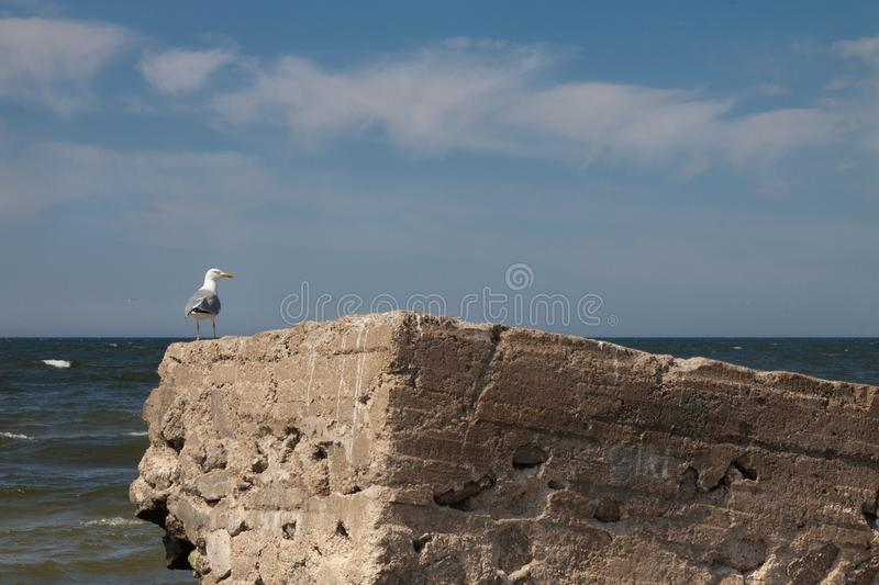 Seagull on the concrete. In summer time. Beach in Klaipeda, Lithuania stock photo