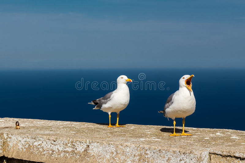 Seagull on a concrete slab. Rock of Gibraltar royalty free stock photography