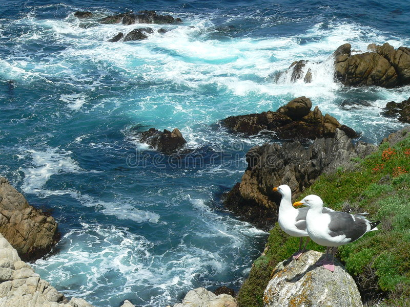 Seagull couple viewing scenery. Seagull couple overlooking their empire at Point Lobos State Park, California near Monterey. Blue ocean with rocks and waves stock images