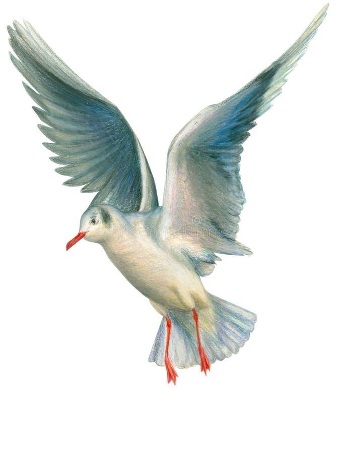 Seagull stock illustration