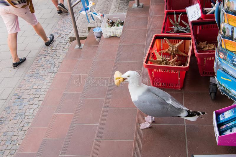 Seagull eating a bread roll standing in the doorway of a souvenir store. Seagull eating a bread roll standing on a tile floor in the doorway of a souvenir store royalty free stock photo
