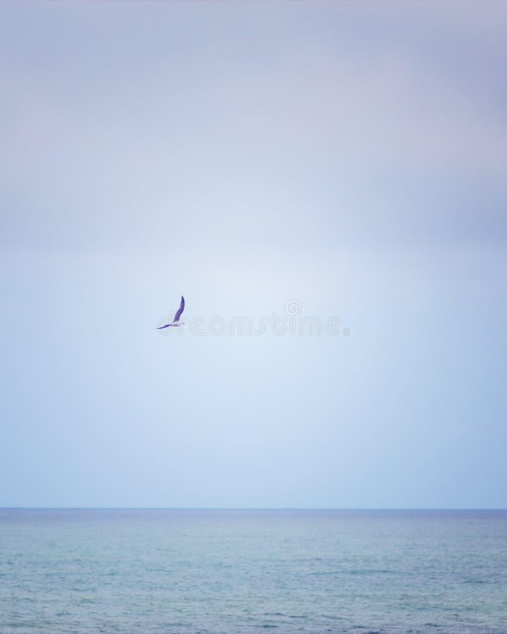 A seagull flies over the sea stock photos
