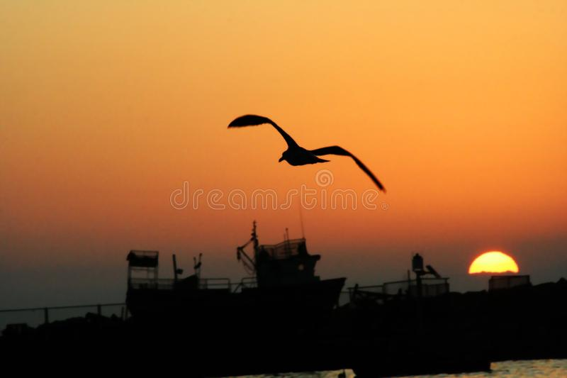Seagull flying towards the marine horizon royalty free stock images