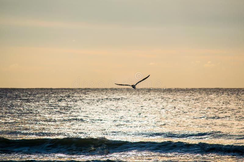 Seagull in flight over water stock photos