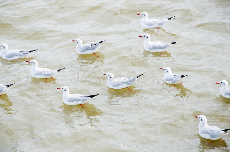 Seagull floating on the sea. stock photos