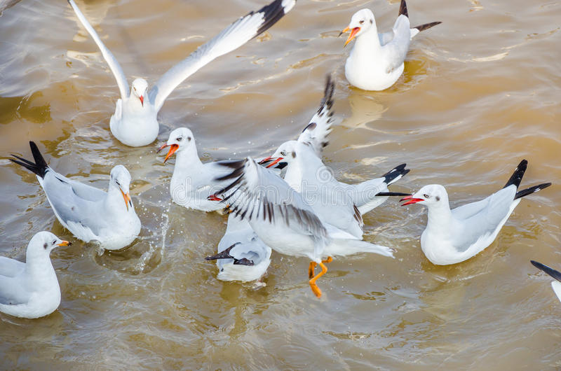Seagull floating on the sea. royalty free stock photography