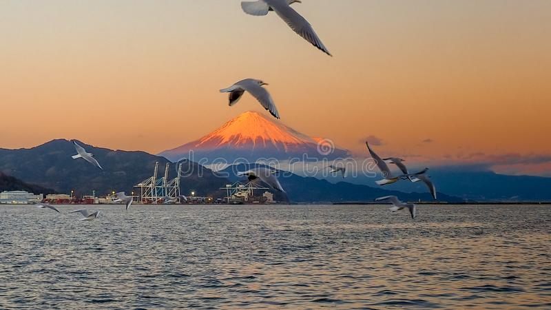 Seagull fly and Mt. Fuji background royalty free stock photos