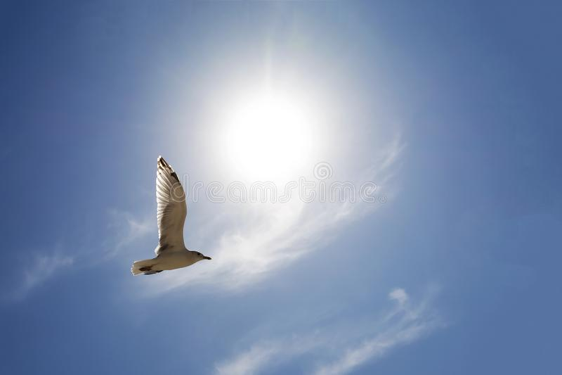 Seagull Flying above clouds against bright sun on summer day royalty free stock photography