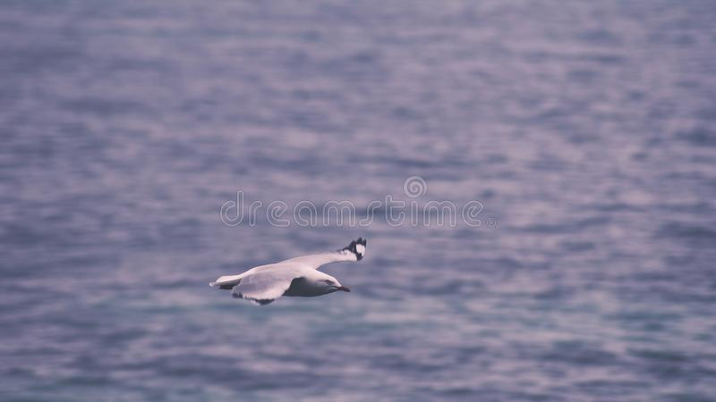 Seagull Flying Across Body Of Water Free Public Domain Cc0 Image