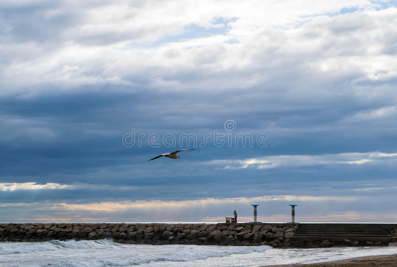 Seagull flying against blue dramatic cloudy sky royalty free stock photos