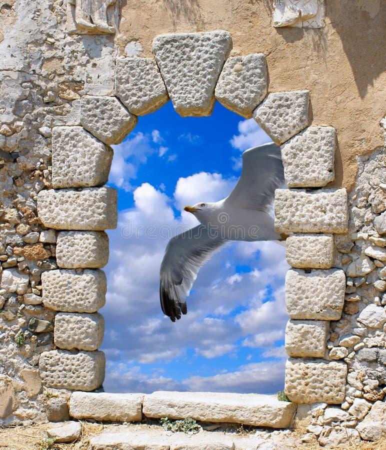 Seagull flying on blue sky. Through an old Venetian window on Kythera island, Greece royalty free stock photo