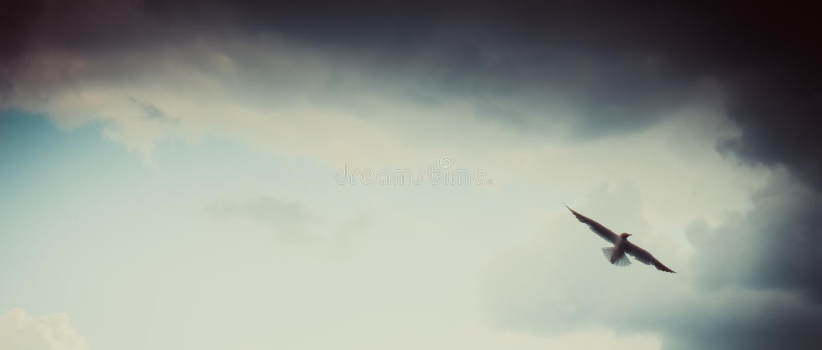 Seagull flying on cloudy beautiful blue sky royalty free stock photography