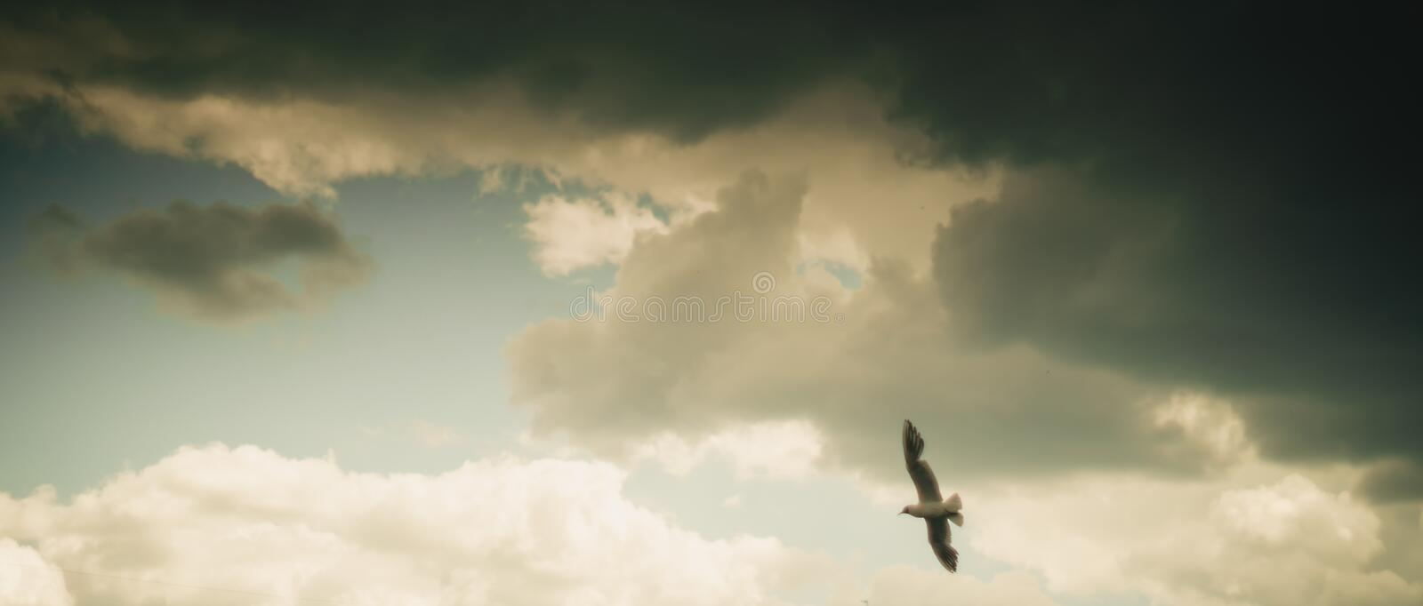 Seagull flying on cloudy beautiful blue sky royalty free stock images