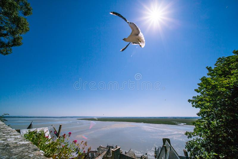 Seagull Flying in front of the Sun in Mont Saint-Michel Abbey on a Sunny Summer Day in Normandy France royalty free stock images