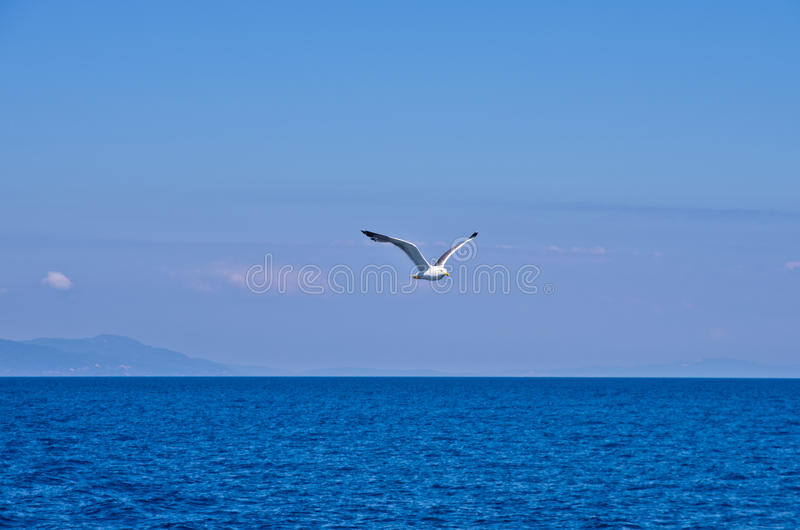 Download Seagull Flying Over Aegean Sea With Greek Islands In Background Stock Image - Image of beauty, seagull: 39500539